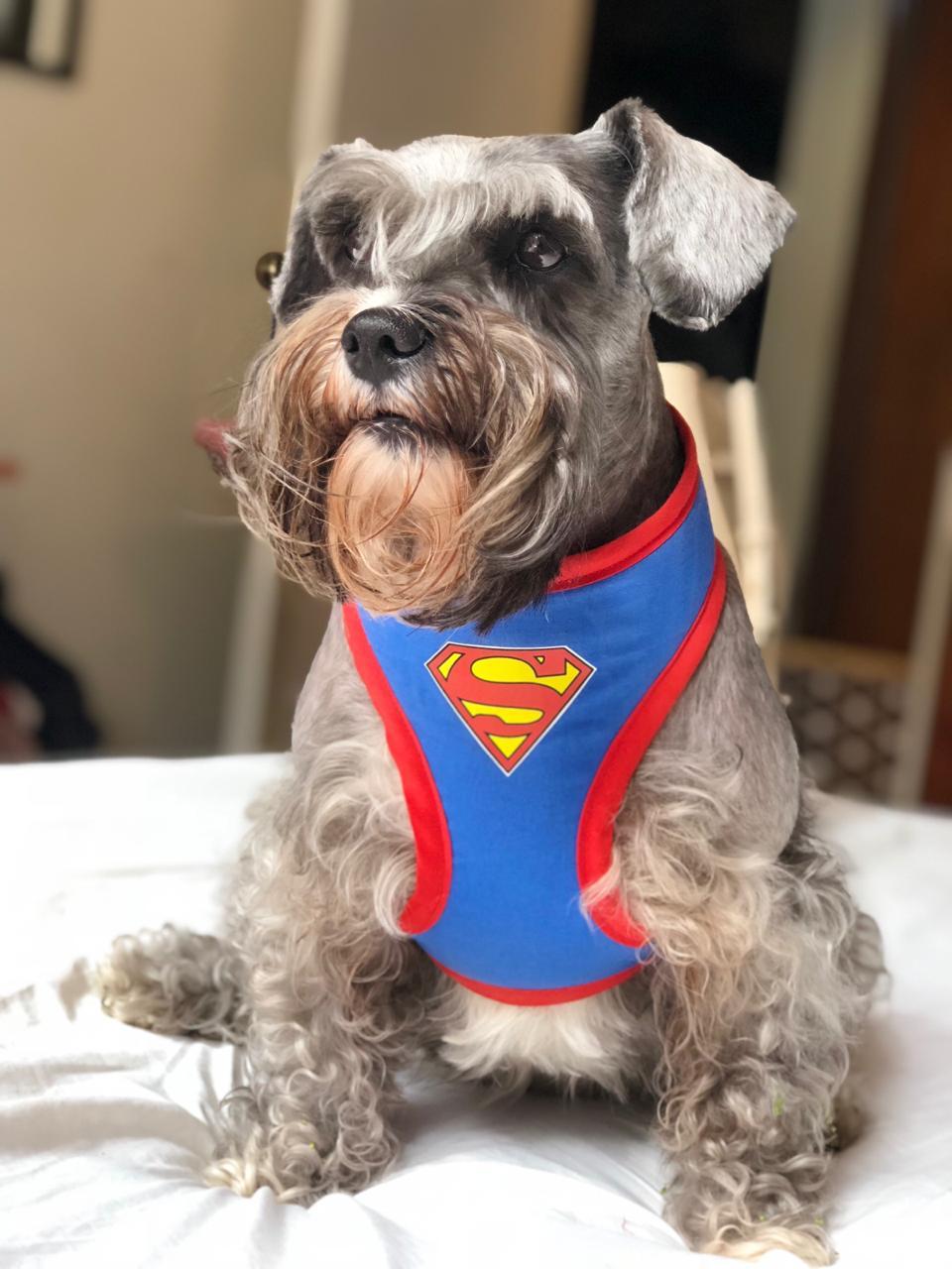 ARNES SUPERMAN